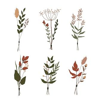 Conjunto de flores do campo isoladas em branco