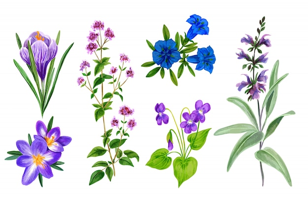 Conjunto de flores do campo selvagem e ervas, aquarela