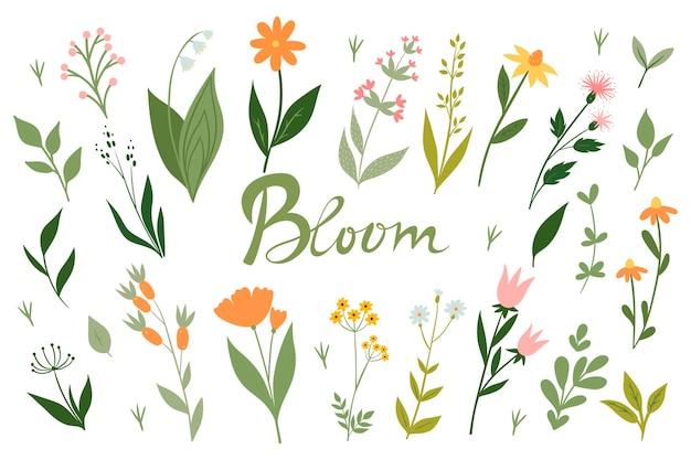 Conjunto de flores do prado e flor de inscrição