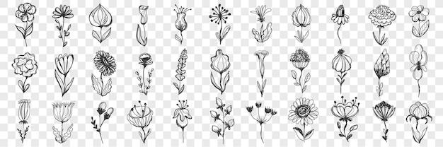 Conjunto de flores doodle.