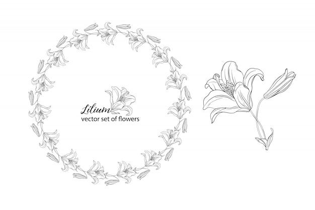 Conjunto de flores e botões de lírio.