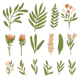 Conjunto de flores e folhas em um fundo branco estilo rústico conjunto de folhas estilo boho