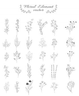 Conjunto de flores e folhas para casamento, loja de flores, estilo mão desenhada