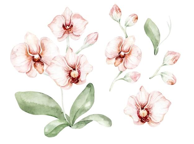 Conjunto de flores e ramos de orquídeas em aquarela