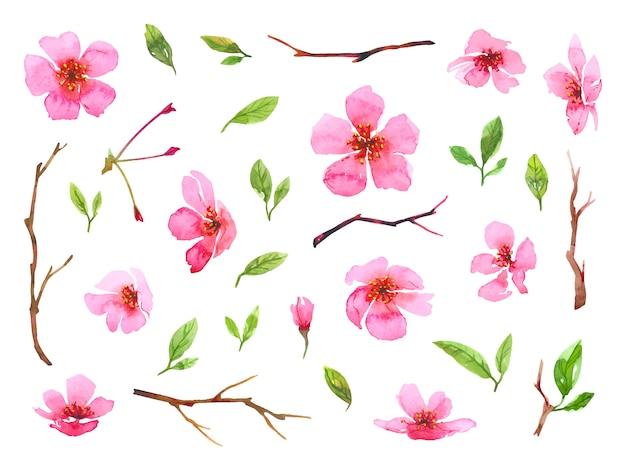 Conjunto de flores em aquarela flor de cerejeira. coleção floral primavera linda sakura. ilustração colorida isolada no fundo branco.