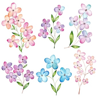 Conjunto de flores em aquarela, flor de cerejeira