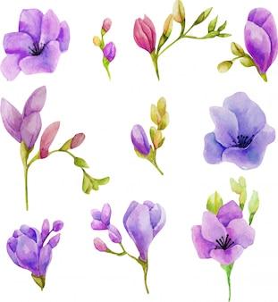 Conjunto de flores em aquarela freesia roxo
