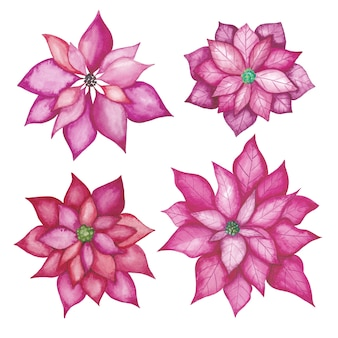 Conjunto de flores em aquarela poinsétia. aquarela flores vermelhas desenhadas à mão