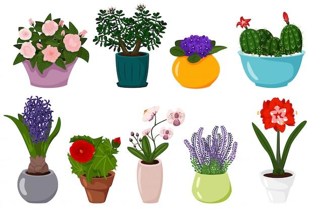 Conjunto de flores em vasos. planta em vaso de florescência