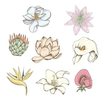 Conjunto de flores exóticas botânicas com desenho colorido