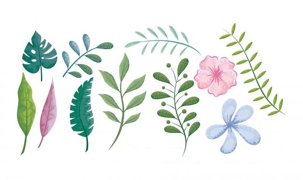 Conjunto de flores, folhas e plantas