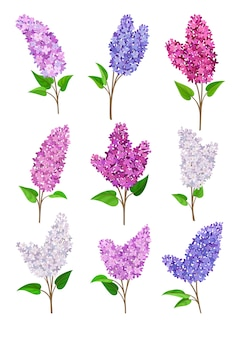 Conjunto de flores lilás de cores diferentes