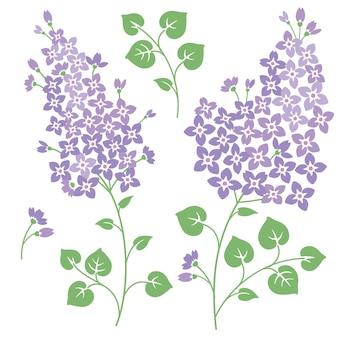 Conjunto de flores lilás para seus designs de primavera Vetor Premium