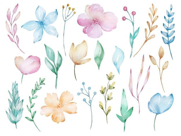 Conjunto de flores macias em aquarela