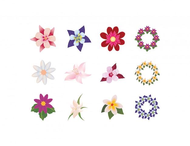 Conjunto de flores naturais isoladas