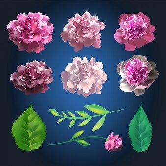 Conjunto de flores rosa botânicas. coleção de verão de elementos de rosa e folhas. ilustração 3d realista.