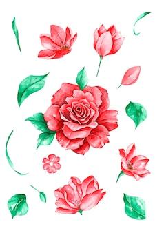 Conjunto de flores rosas e folhas desenho vetorial e pintura de aquarela