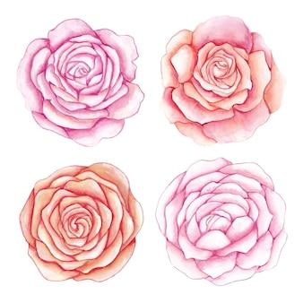 Conjunto de flores rosas em aquarela. conjunto de flores de rosas aquarela desenhadas à mão