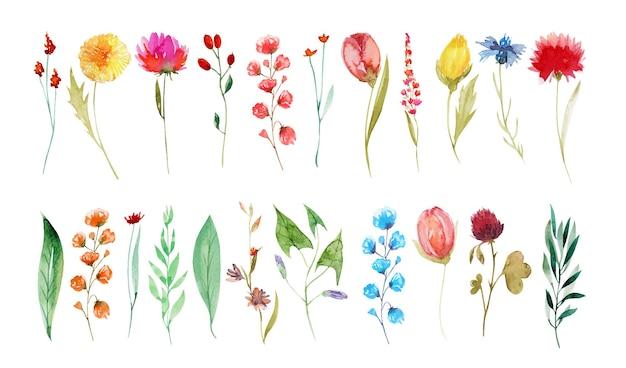 Conjunto de flores silvestres de verão aquarela dente-de-leão centáurea trevo tulipa pintada à mão ilustrações isoladas