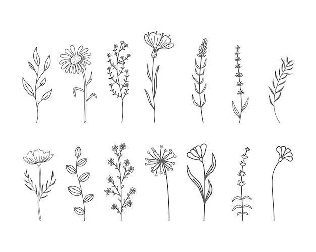 Conjunto de flores silvestres desenhadas à mão e ervas.