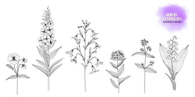 Conjunto de flores silvestres desenhados à mão.
