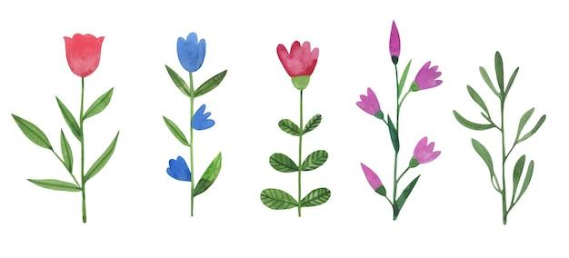 Conjunto de flores silvestres e ervas em aquarela bonito mão desenhada.