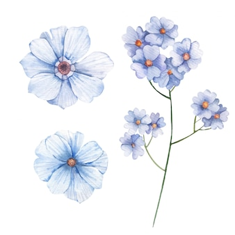 Conjunto de flores silvestres miosótis aquarela ilustração em fundo branco
