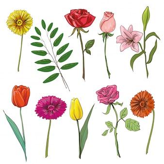 Conjunto de flores tradicionais para buquê.