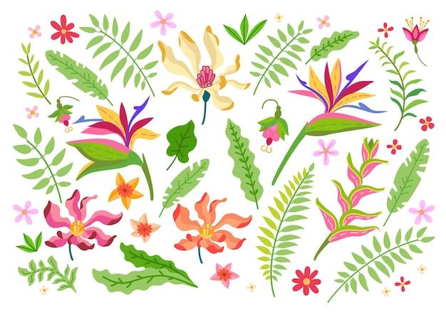 Conjunto de flores tropicais. elementos florais da floresta tropical dos desenhos animados isolados