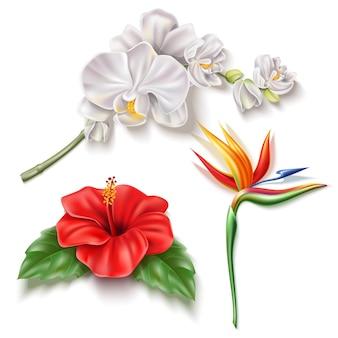 Conjunto de flores tropicais realistas