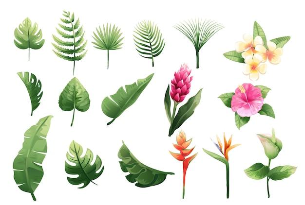Conjunto de flores tropicais vector