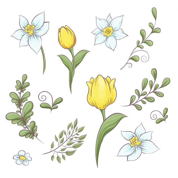Conjunto de flores tulipas