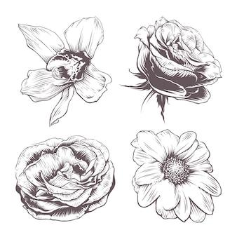Conjunto de flores vetoriais