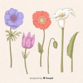 Conjunto de flores vintage desenhadas à mão