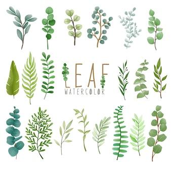 Conjunto de folha pintada em aquarela, clipart de folhas verdes. desenho isolado no fundo branco.