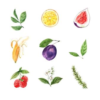 Conjunto de folhagem aquarela e frutas