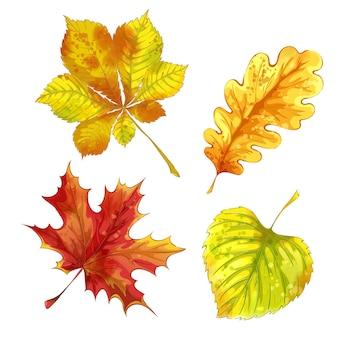 Conjunto de folhas caídas de outono com textura aquarela.