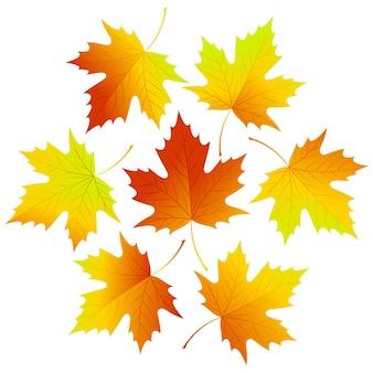 Conjunto de folhas caindo
