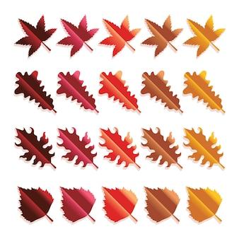 Conjunto de folhas coloridas de outono