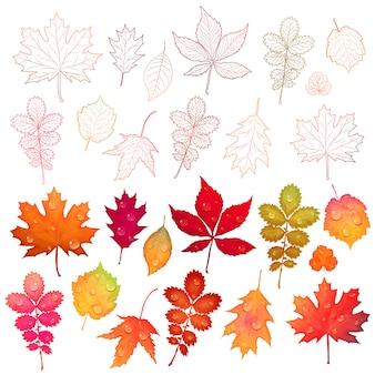 Conjunto de folhas coloridas