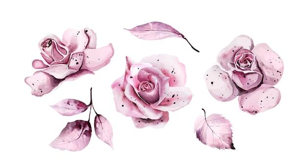 Conjunto de folhas de aquarela rosa e rosas