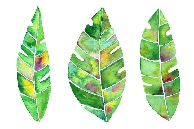 Conjunto de folhas de banana em aquarela. impressões vetoriais