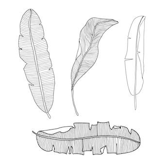 Conjunto de folhas de bananeira desenhadas à mão, isoladas no fundo branco