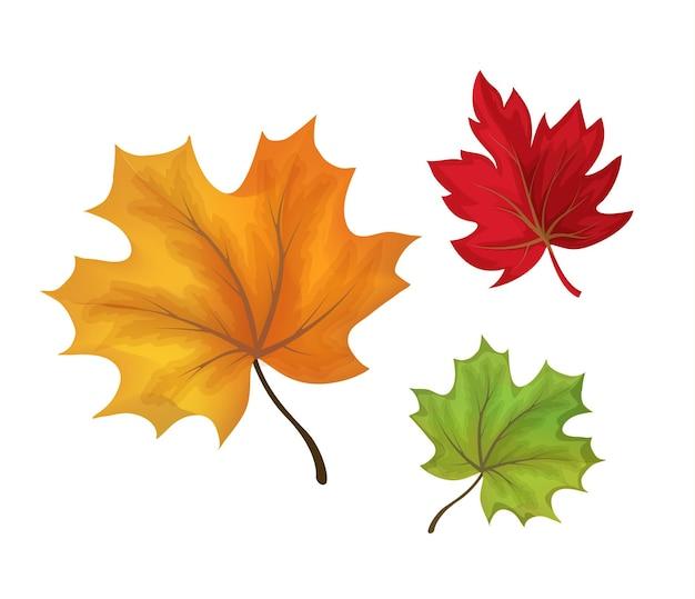 Conjunto de folhas de bordo de outono. objetos florais da floresta de cor verde laranja, vermelho.