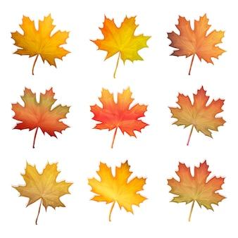 Conjunto de folhas de bordo outono