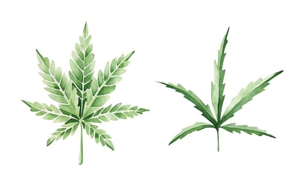 Conjunto de folhas de cannabis desenhadas à mão