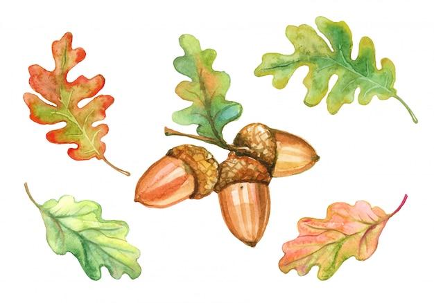 Conjunto de folhas de carvalho em aquarela e bolotas.