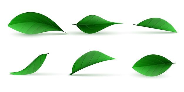 Conjunto de folhas de chá verde realistas
