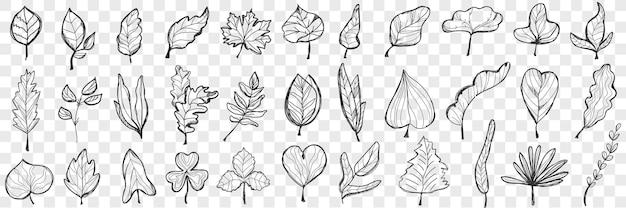 Conjunto de folhas de doodle.