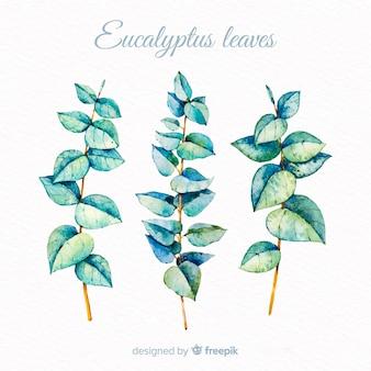 Conjunto de folhas de eucalipto em aquarela